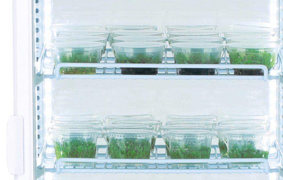 ADAの水草