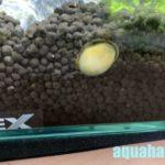 石巻貝が潜る