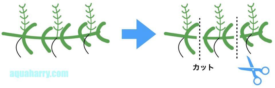 水草のカット例