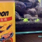 熱帯魚のフレーク状の餌
