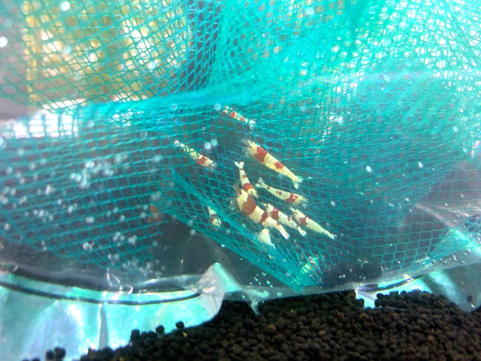 レッドビーシュリンプに網を同梱する